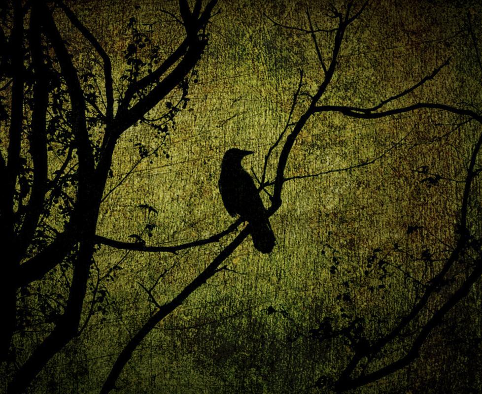 A fekete holló rejtély marad (2014)